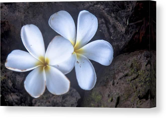 Plumeria Canvas Print featuring the photograph Pretty Plumeria by Robin Krueger