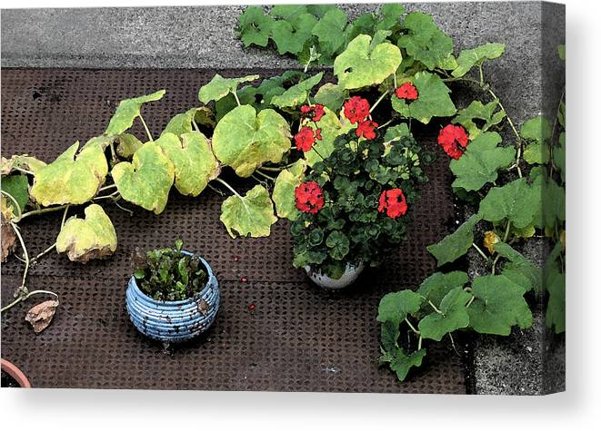 Flowers Canvas Print featuring the photograph Urban Flowers by Gary Everson