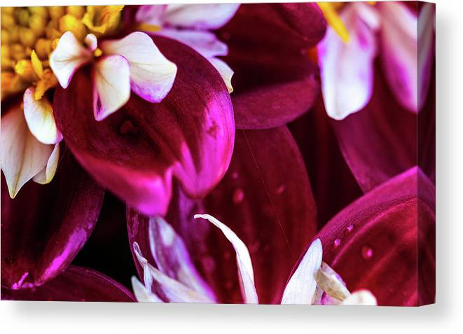 Closeup Canvas Print featuring the photograph One Strand by Onyonet Photo Studios