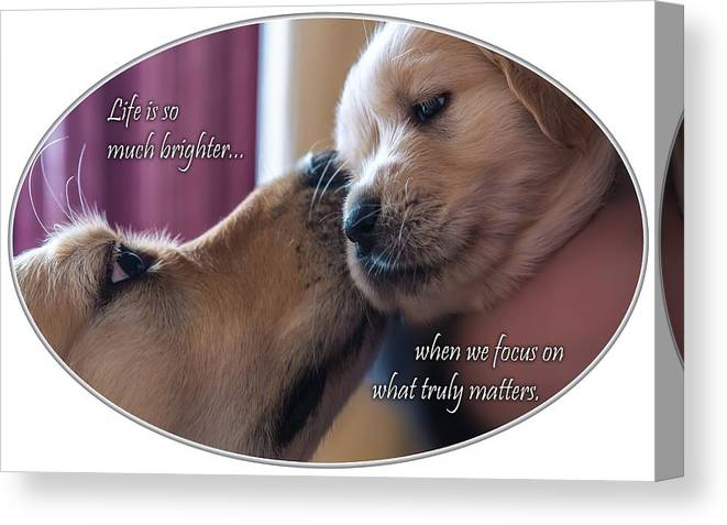 Puppy Canvas Print featuring the photograph Puppy Love by Chris Whiton