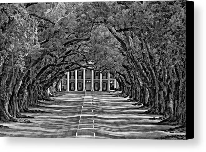 Oak Alley Plantation Canvas Print featuring the photograph Oak Alley Bw by Steve Harrington