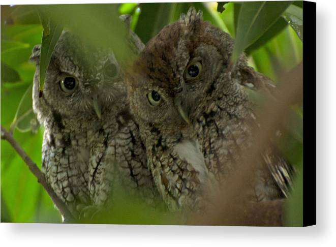 Birds Garden Resident Canvas Print featuring the photograph Four Eyes by Dwayne Wynne