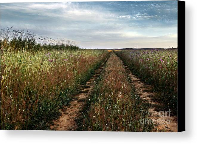 Adventure Canvas Print featuring the photograph Countryside Tracks by Carlos Caetano