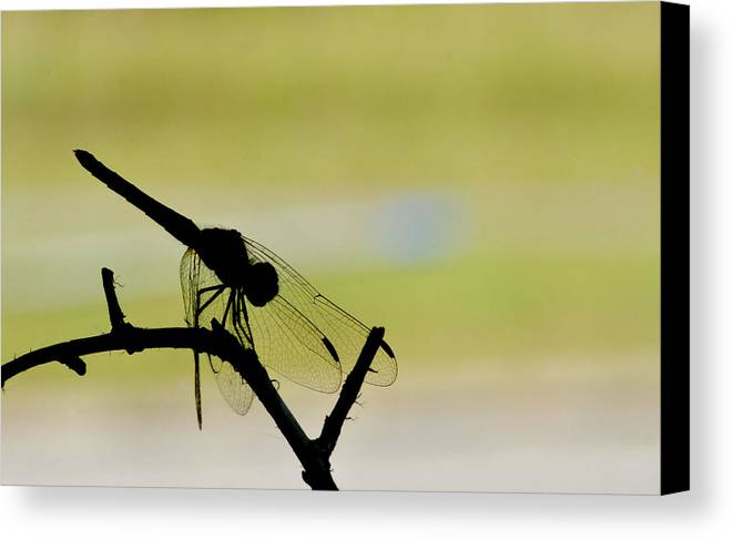 Dragonfly Canvas Print featuring the photograph Dragonfly Silhouette by Julie Wynn