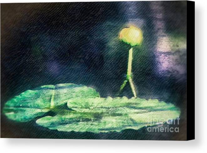 Water Lily Canvas Print featuring the photograph Almost Blooming by Carolyn Fox