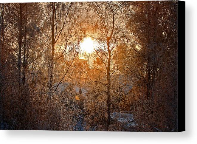 Country Canvas Print featuring the photograph Winter Light by Nikolay Krusser