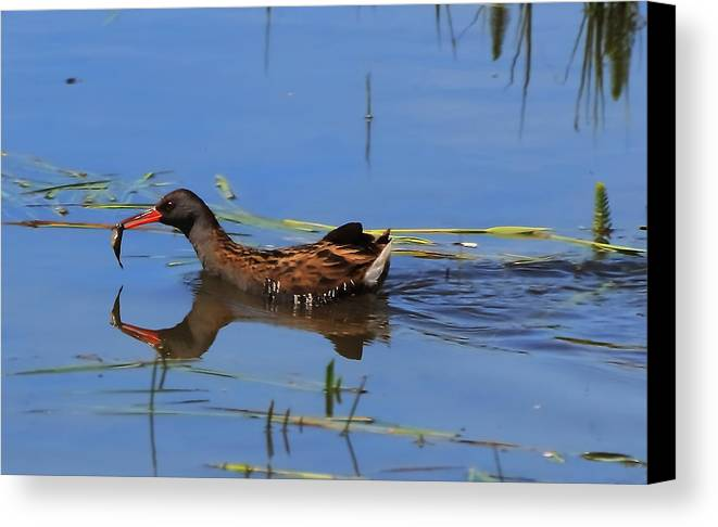 Water Canvas Print featuring the photograph Water Rail With Fish by Jeff Townsend