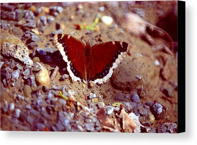 Butterfly Canvas Print featuring the photograph 113093-1 by Mike Davis