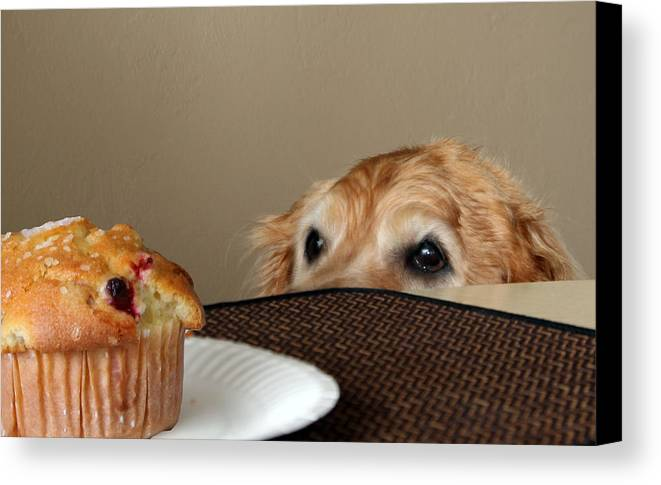 Dog Canvas Print featuring the photograph About To Be Naughty by Bill Linhares