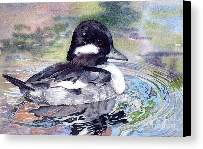 Bird Canvas Print featuring the painting Bufflehead Duck by Lorraine Watry