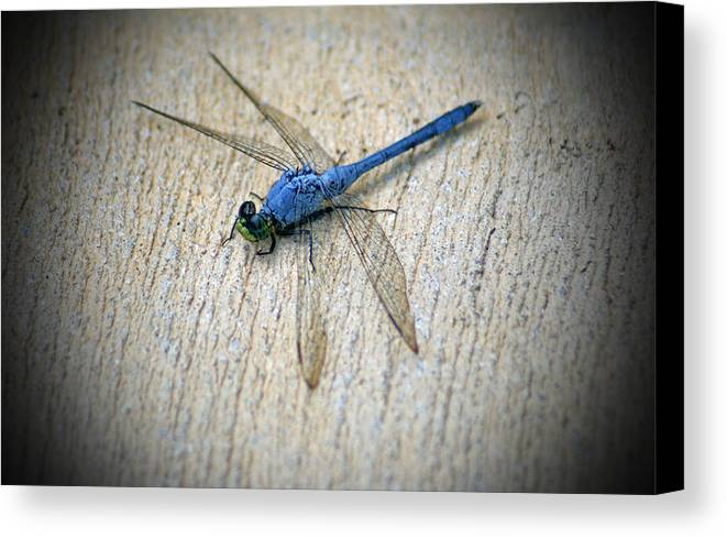 Dragonfly Canvas Print featuring the photograph Dragonfly by Jean Haynes