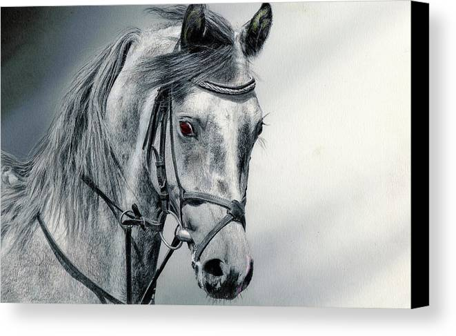 Horse Canvas Print featuring the drawing Grey by Paul Archer