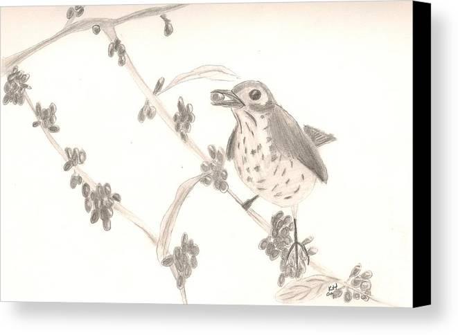 Bird Canvas Print featuring the drawing Little Bird by Kristen Hurley