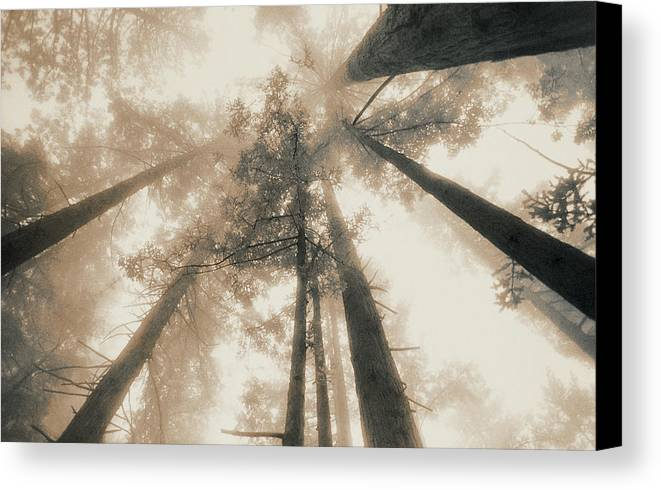 Horizontal Canvas Print featuring the photograph Redwood Forest, Northern California, Usa by Mel Curtis