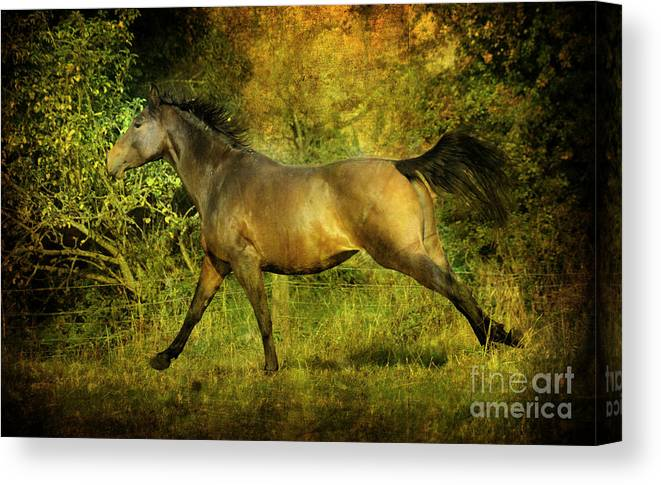 Horses Canvas Print featuring the photograph Running Free by Angel Ciesniarska