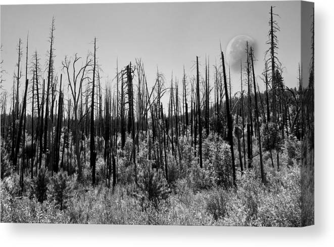 Moon Canvas Print featuring the photograph Burnt Moonscape by Nathan Anglin