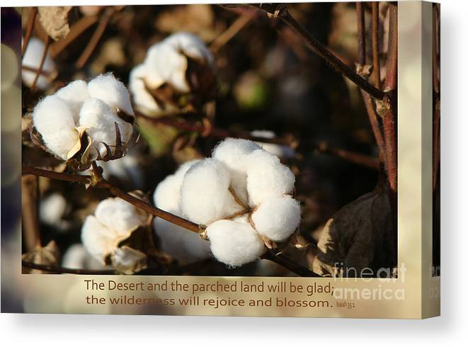Cotton Field Canvas Print featuring the photograph Cotton Bolls Ready For Harvest by Beverly Guilliams