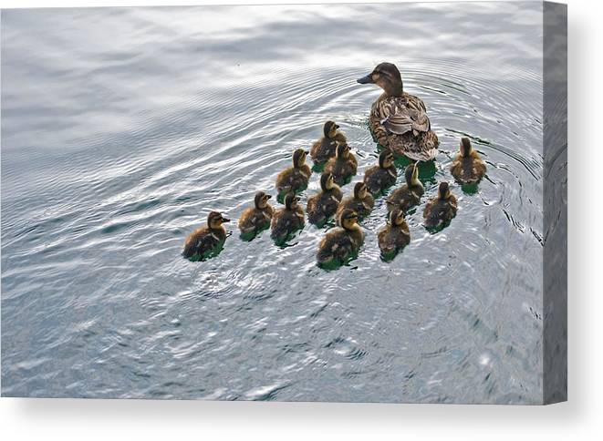 Duck Canvas Print featuring the photograph Following The Leader by Michael Cole