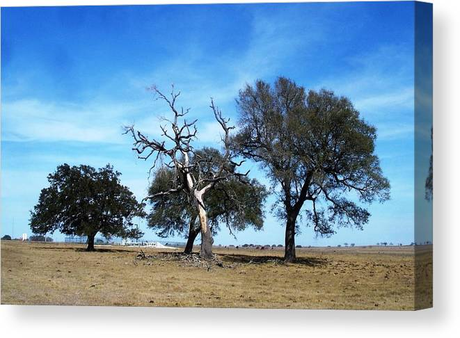 Landscape Canvas Print featuring the photograph Treegedy by Mark Centennial