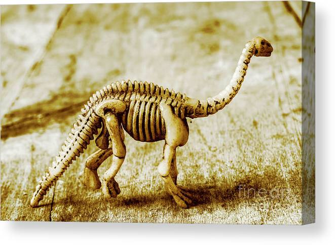 Bone Canvas Print featuring the photograph A Diploducus Bone Display by Jorgo Photography - Wall Art Gallery