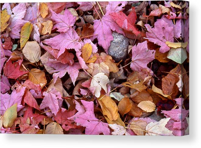 Leaf Canvas Print featuring the photograph Autumn Leaves On The Forest Floor by Tony Ramos