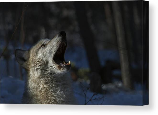 Wildlife Canvas Print featuring the photograph Cry In The Wild by Jeff Shumaker