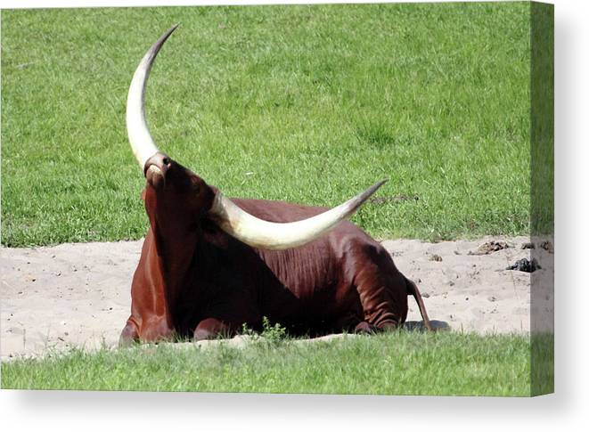 Animal Canvas Print featuring the photograph Even Animals Love The Sunshine by Mary Haber