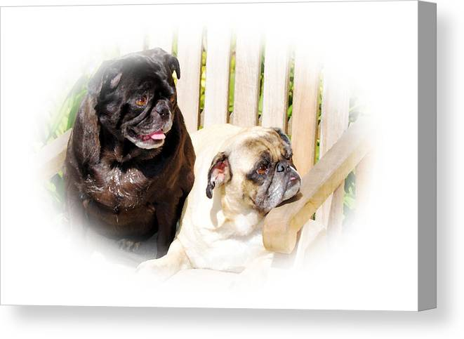 Dog Canvas Print featuring the photograph Leroy And Mrs. Jones by Ellen Lerner ODonnell