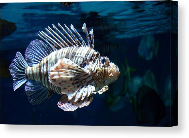 Animal Canvas Print featuring the photograph Lionfish by Taras Bekhta