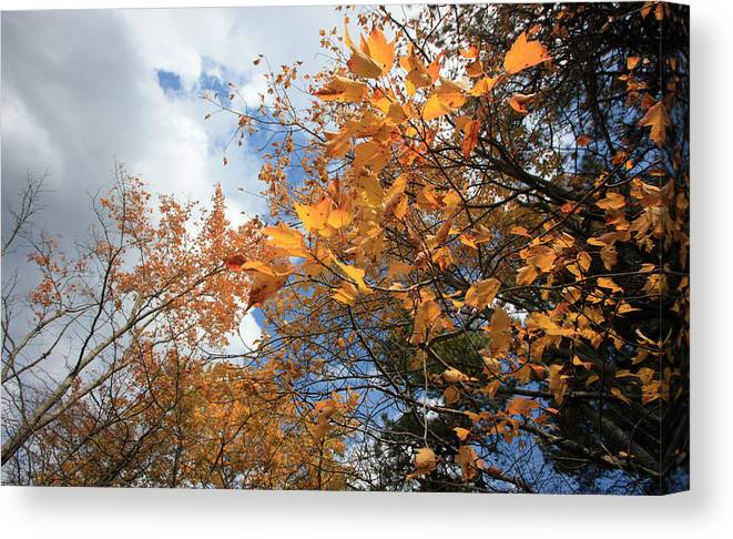 Leaves Canvas Print featuring the photograph Orange And Blue by Mary Haber