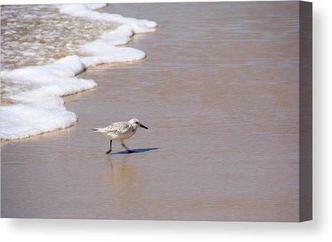 Nature Canvas Print featuring the photograph Shorebird by Ty Nichols