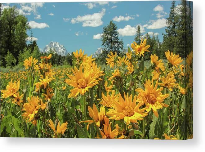 Grand Teton National Park Canvas Print featuring the photograph Teton Sun by Angelique Rea