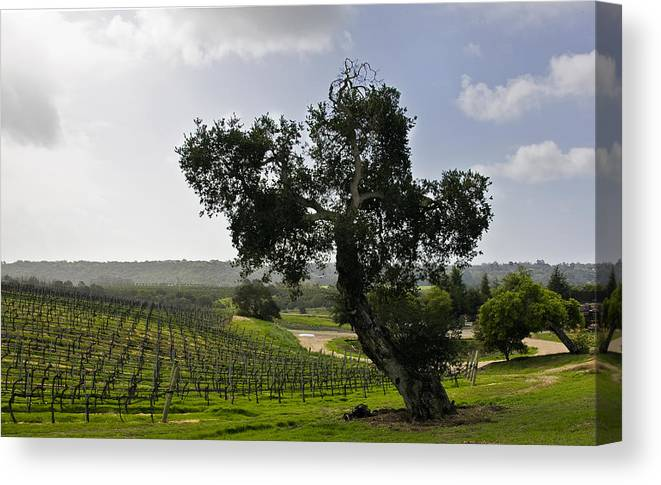 Vineyard Canvas Print featuring the photograph Vineyard In Fog by Patricia Stalter