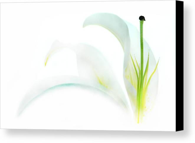 Flower Canvas Print featuring the photograph Shining Through by Dan Holm