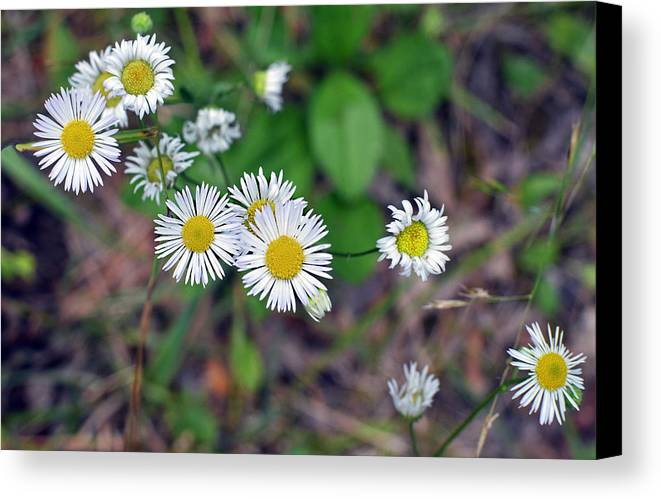 Wildflowers Canvas Print featuring the photograph Wildflowers by Paul Pecora