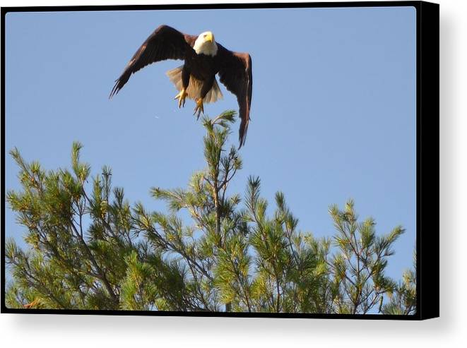 Eagle Canvas Print featuring the photograph Airborne by Roger Rabiego