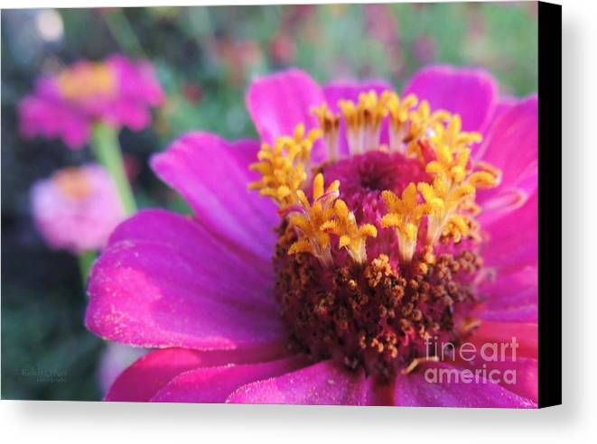 Bloom Canvas Print featuring the photograph Bridgets Bloom by Robert ONeil