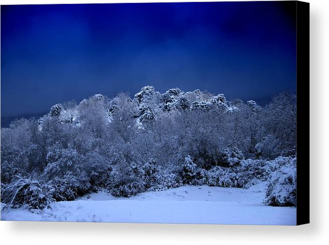 Winter Canvas Print featuring the photograph Fallen Angel Of Winter by Three MagicFingers