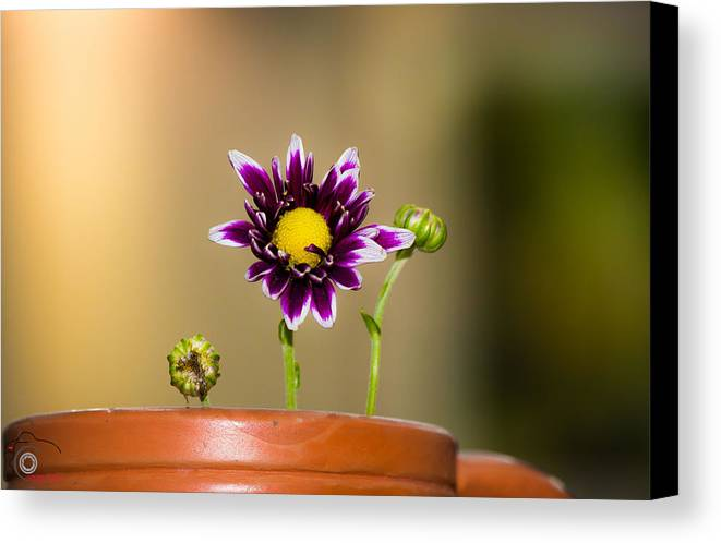 Flower Canvas Print featuring the photograph Flower Family by Manjurul Morshed