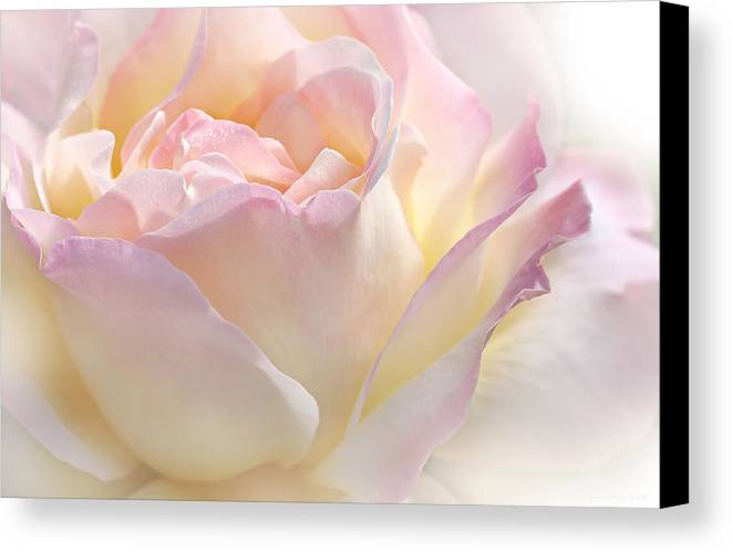 Rose Canvas Print featuring the photograph Heaven's Pink Rose Flower by Jennie Marie Schell