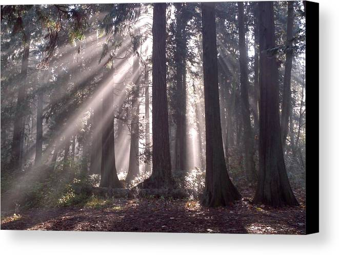 Forest Canvas Print featuring the photograph Light Of Awakening by Image-in Photoart