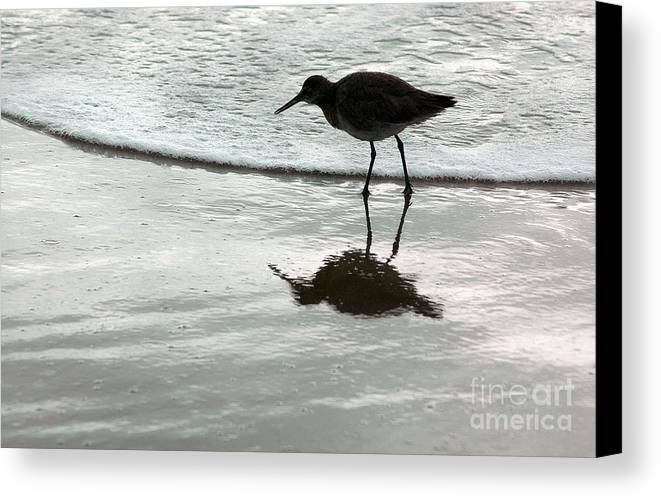 Beach Canvas Print featuring the photograph Little Footsteps by Dan Holm