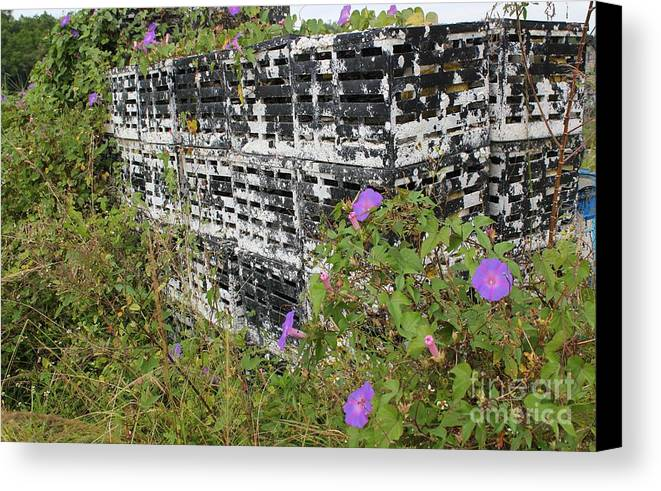 Morning Glories Canvas Print featuring the photograph Morning Glories And Crab Traps by Theresa Willingham
