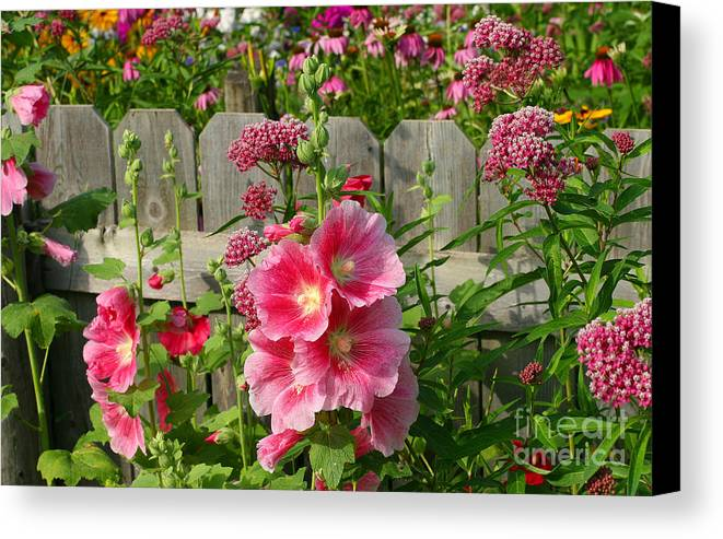Hollyhocks Canvas Print featuring the photograph My Garden 2011 by Steve Augustin