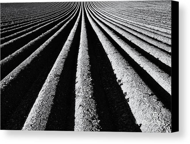 Ploughed Field Canvas Print featuring the photograph Ridge And Furrow by Tim Gainey