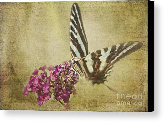 Butterfly Canvas Print featuring the photograph Tiger Swallowtail by Pam Holdsworth