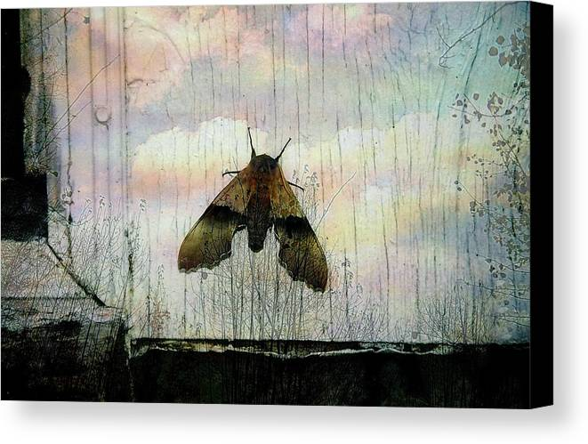 Surreal Canvas Print featuring the photograph Just Arrived by Shirley Sirois