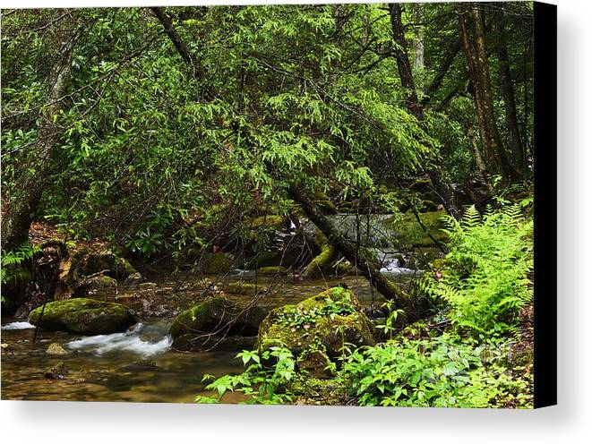 Rushing Mountain Stream Canvas Print featuring the photograph Rushing Mountain Stream by Thomas R Fletcher