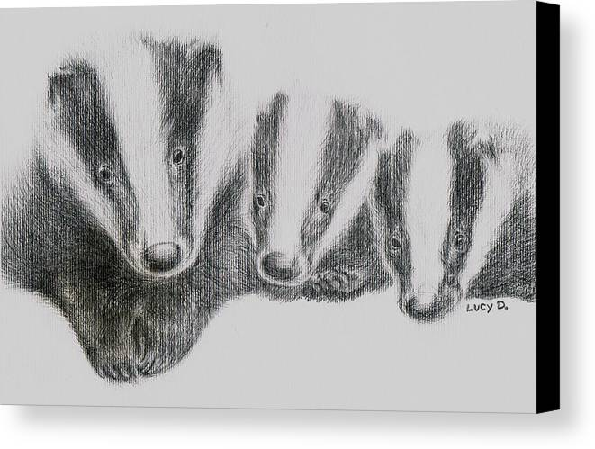 Badgers Canvas Print featuring the drawing Badgers by Lucy D