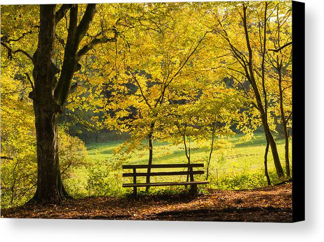 Fall Canvas Print featuring the photograph Golden October - Bench And Yellow Trees In Fall by Matthias Hauser